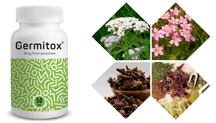 Germitox: to skuteczny środek na pasożyty!