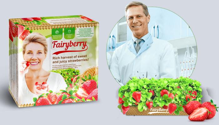FairyBerry: niesamowite zbiory dużych i smacznych truskawek już po jednym miesiącu!